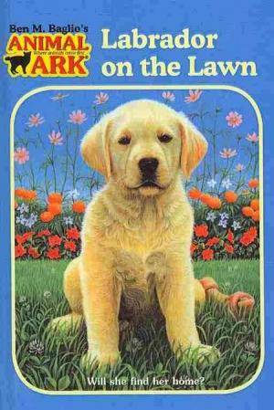 Labrador on the Lawn