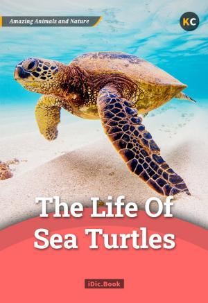 The Life of Sea Turtles