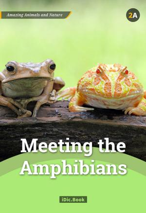 Meeting the Amphibians