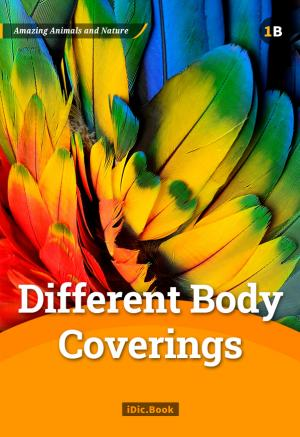 Different Body Coverings