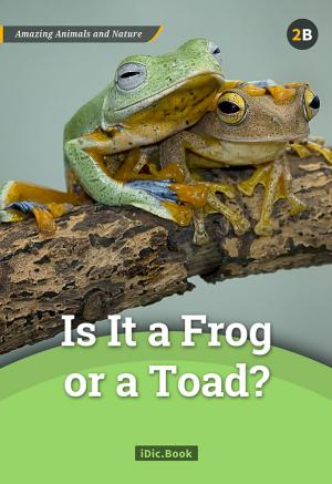 Is it a Frog or a Toad?